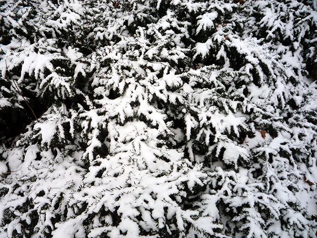 WinterPortrait14