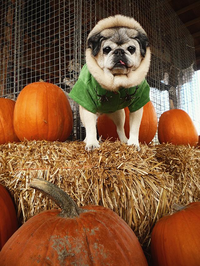 PumpkinPatch11
