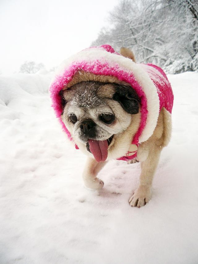Snow27