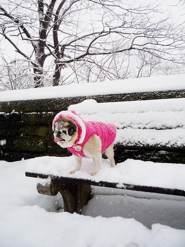 Snow5